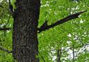 Ein Eichhörnchen schaut neugierig auf die Bohnerzspur herunter
