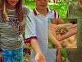 Ein Frosch!